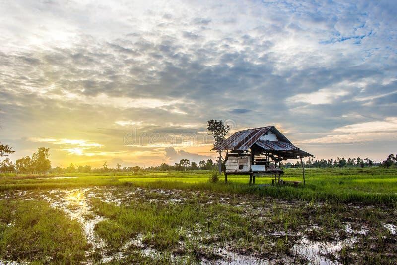 Cottage de coucher du soleil dans le champ de maïs photos libres de droits