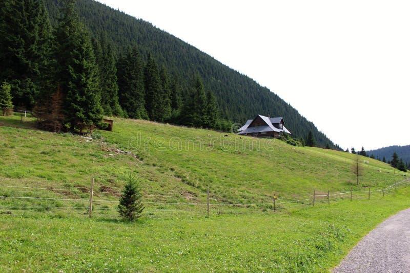 Cottage de montagne forrest image libre de droits