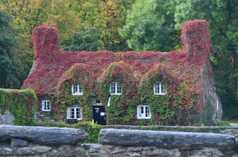 Cottage de thé images stock