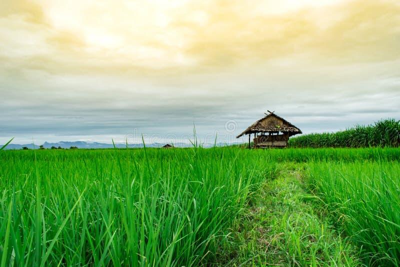 Cottage nel giacimento del riso fotografie stock libere da diritti