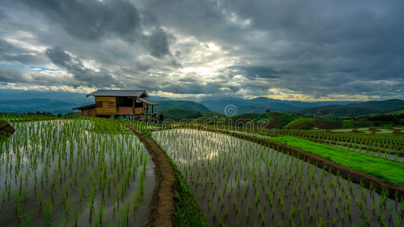 Cottage Paddy Rice Field Plantation image stock