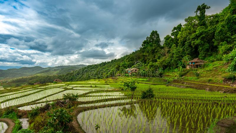 Cottage Paddy Rice Fields Landscape. With Mountain View Background royalty free stock photography