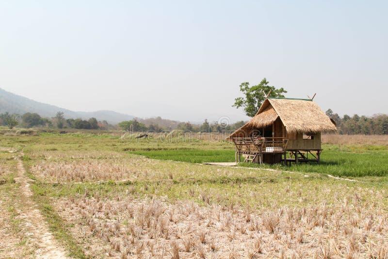 Cottage sul giacimento del riso fotografia stock libera da diritti