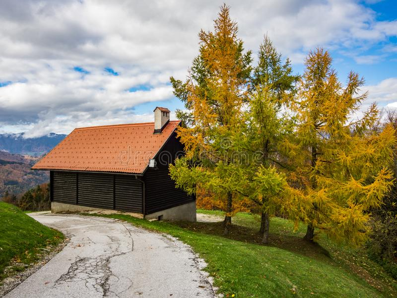 Cottage and three yellow larch trees. On the top of the St. Jost mountain royalty free stock images