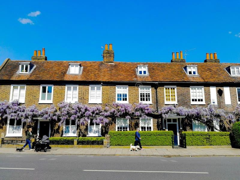 Cottages Angleterre de fleur de fleur de glycine de ressort photos stock
