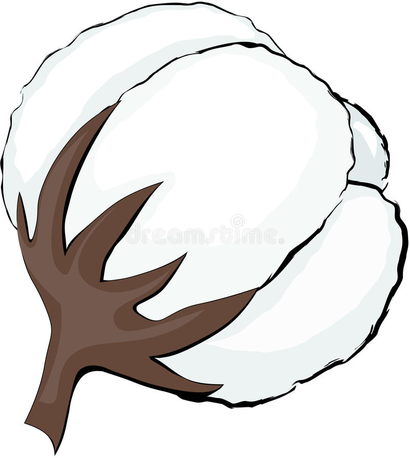 Cotton Stock Photography