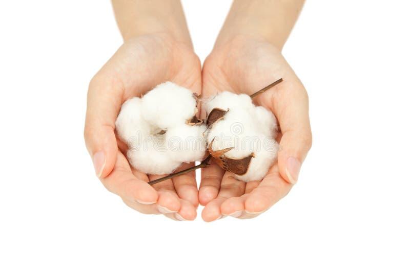 Download Cotton Stock Photos - Image: 15016093