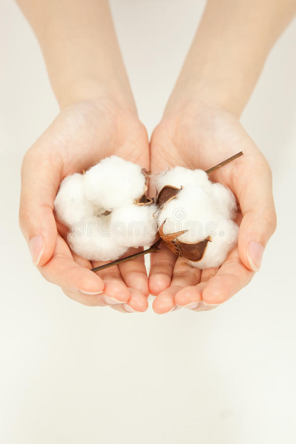Download Cotton stock image. Image of truth, white, cottons, palm - 15016097