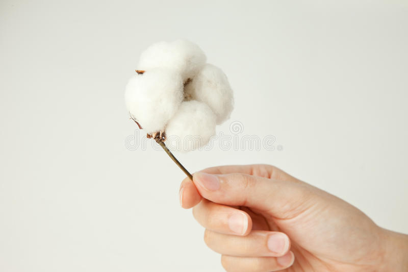 Download Cotton stock photo. Image of room, cottons, cotton, down - 15016100