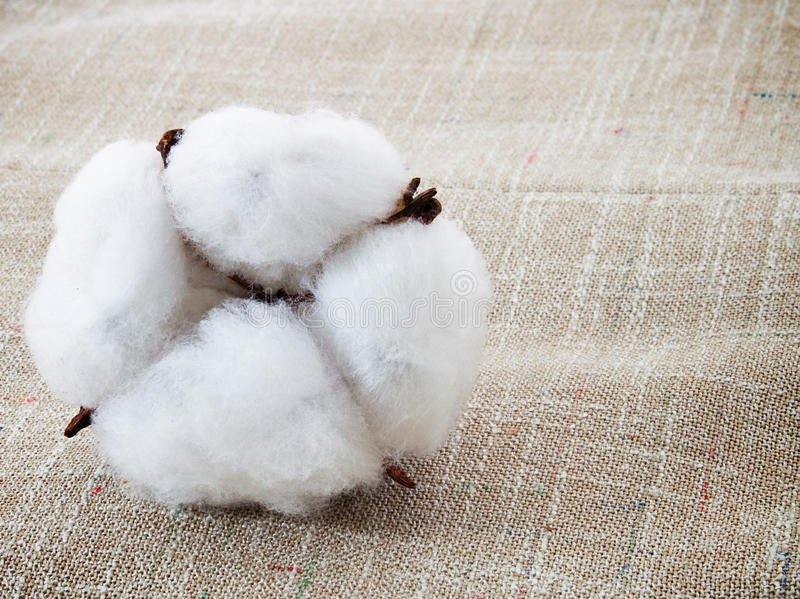 Download Cotton Royalty Free Stock Images - Image: 26571949