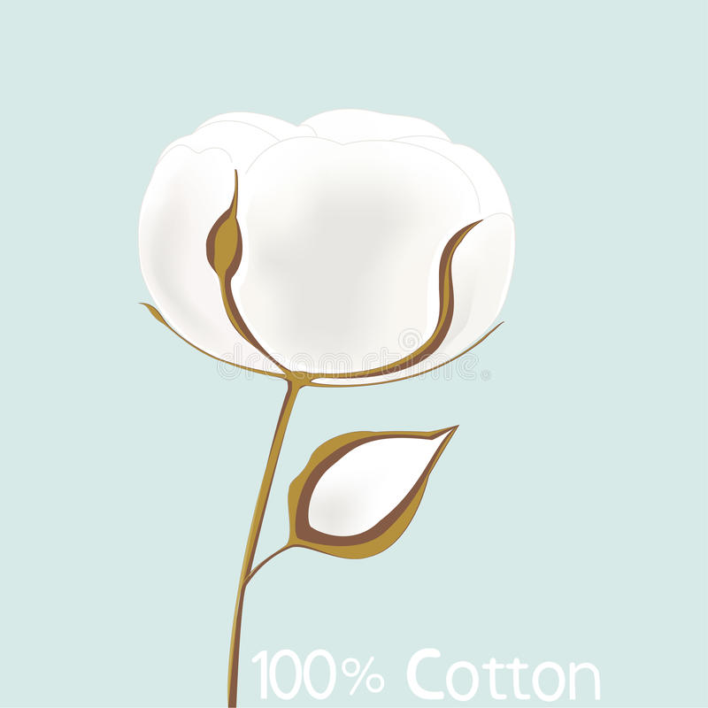 Cotton. Illustration of flower cotton on blue background royalty free illustration