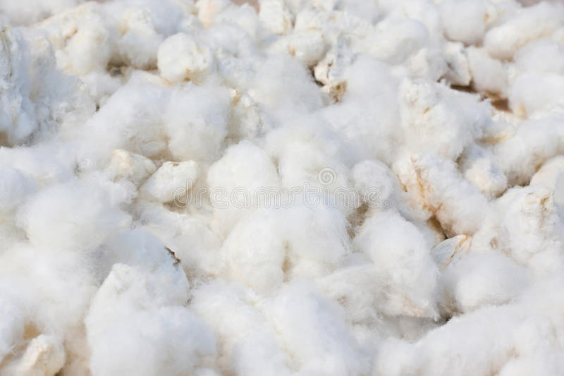 Cotton background royalty free stock photo