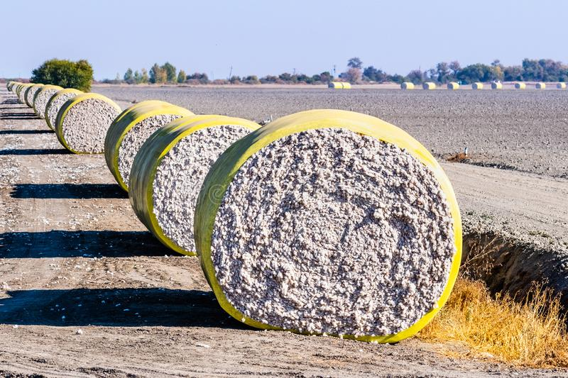 Cotton bales arranged in a row next to a harvested field, ready for pick up; Central California, United States stock photos