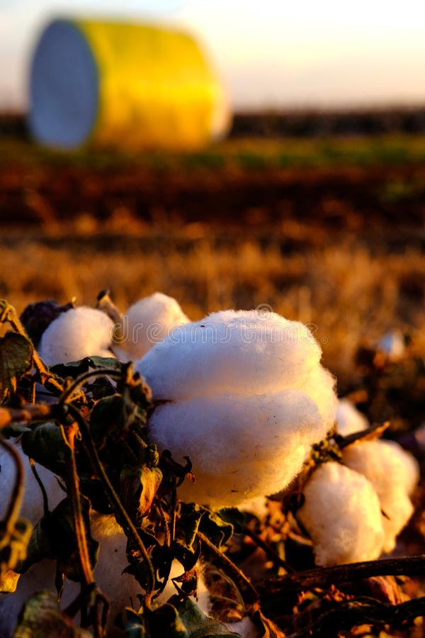 Cotton ball with cotton bale in the back ground. Cottons ball with cotton bale in the back ground royalty free stock photos