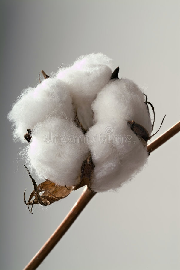 cotton balowa fotografia royalty free
