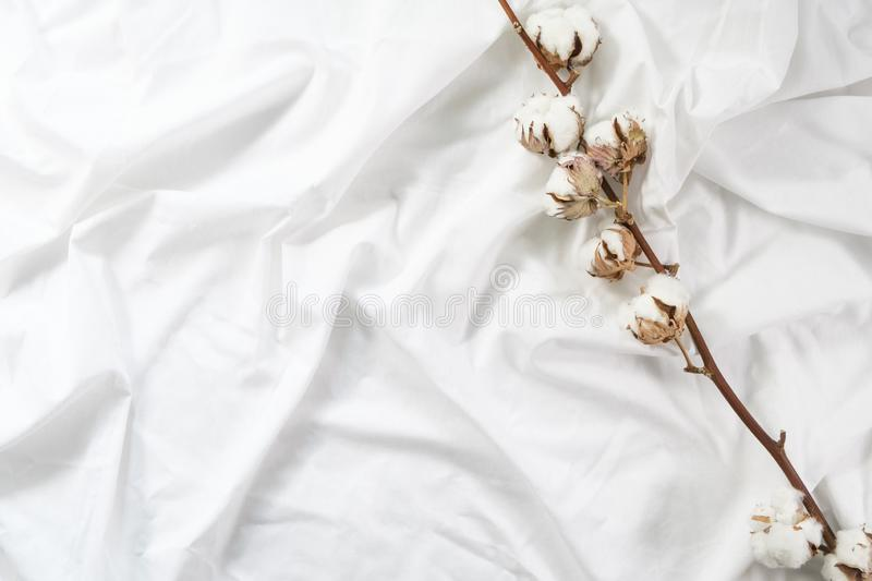 A cotton branch lies on a white cotton cloth. Autumn cozy flat. Minimalism. stock photography