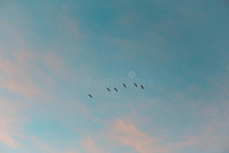 Cotton candy sky ft. birds royalty free stock photography