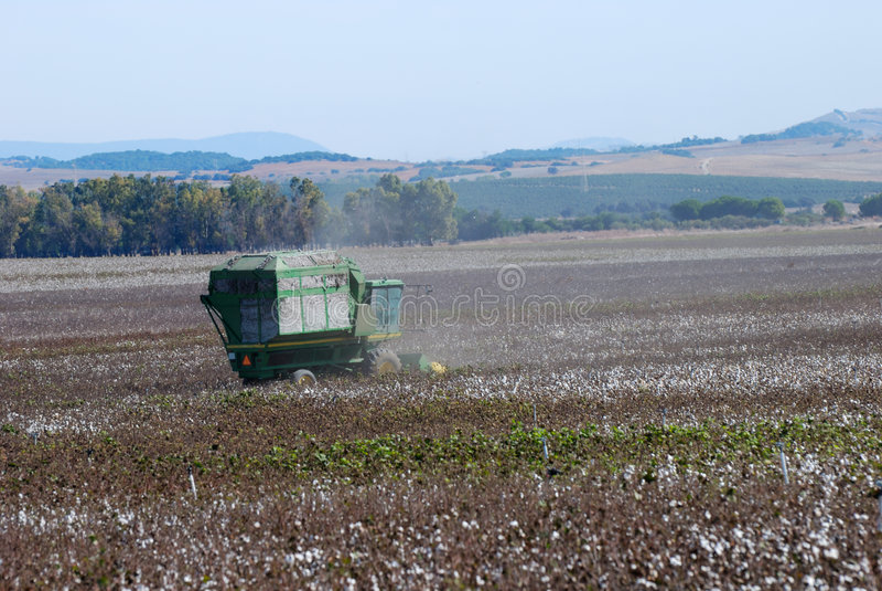 Download Cotton crop stock photo. Image of ball, farmland, fabric - 3625470