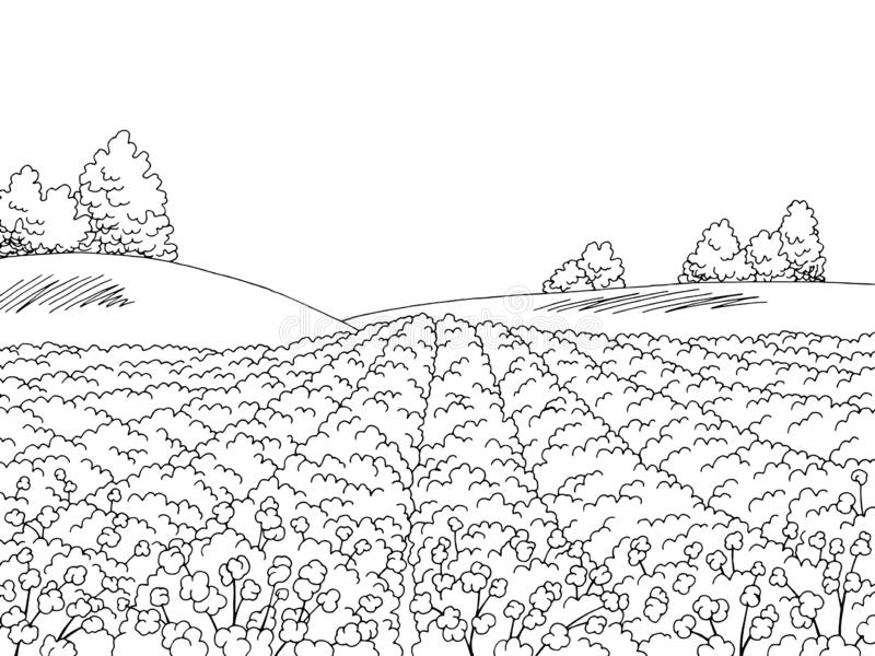 Cotton field graphic black white landscape sketch illustration vector stock illustration