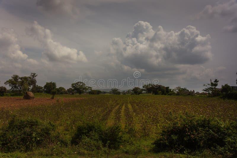 Cotton field under balck storm skies in South Karnataka, India. stock photos