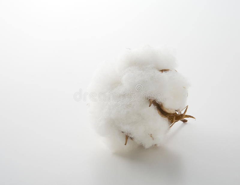 Download Cotton Flower Royalty Free Stock Image - Image: 20809426
