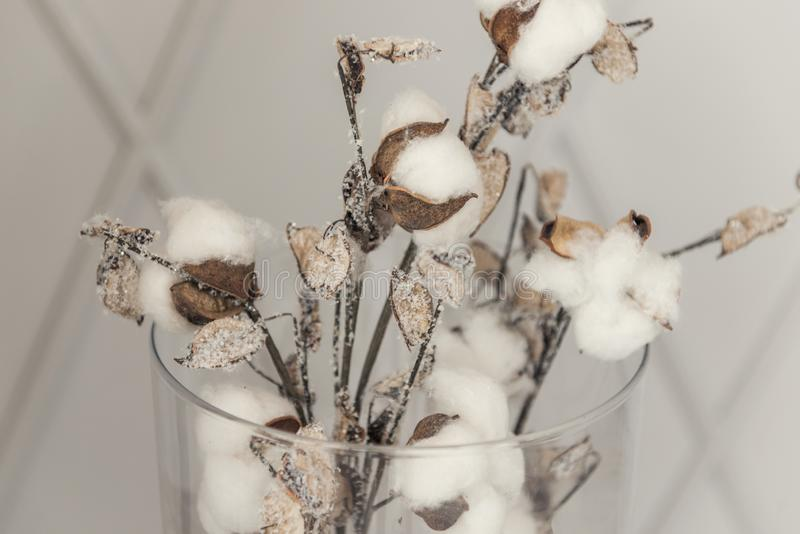 Cotton flowers as a symbol of tenderness and new life royalty free stock photos