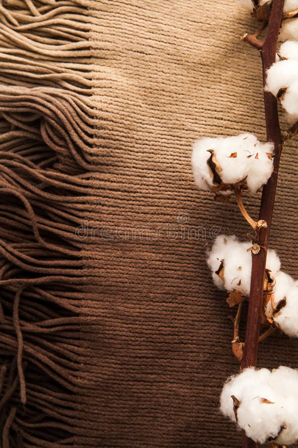 Cotton flowers on brown fabric scarf closeup. Minimal layout. Home-like concept stock photo