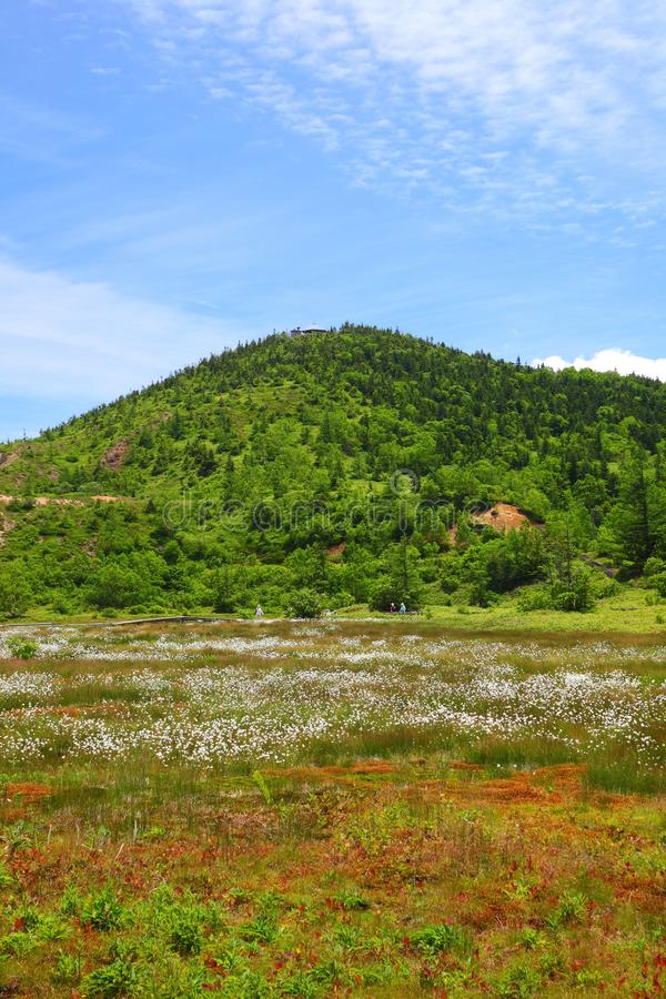Download Cotton grass and mountain stock image. Image of beautiful - 25883229