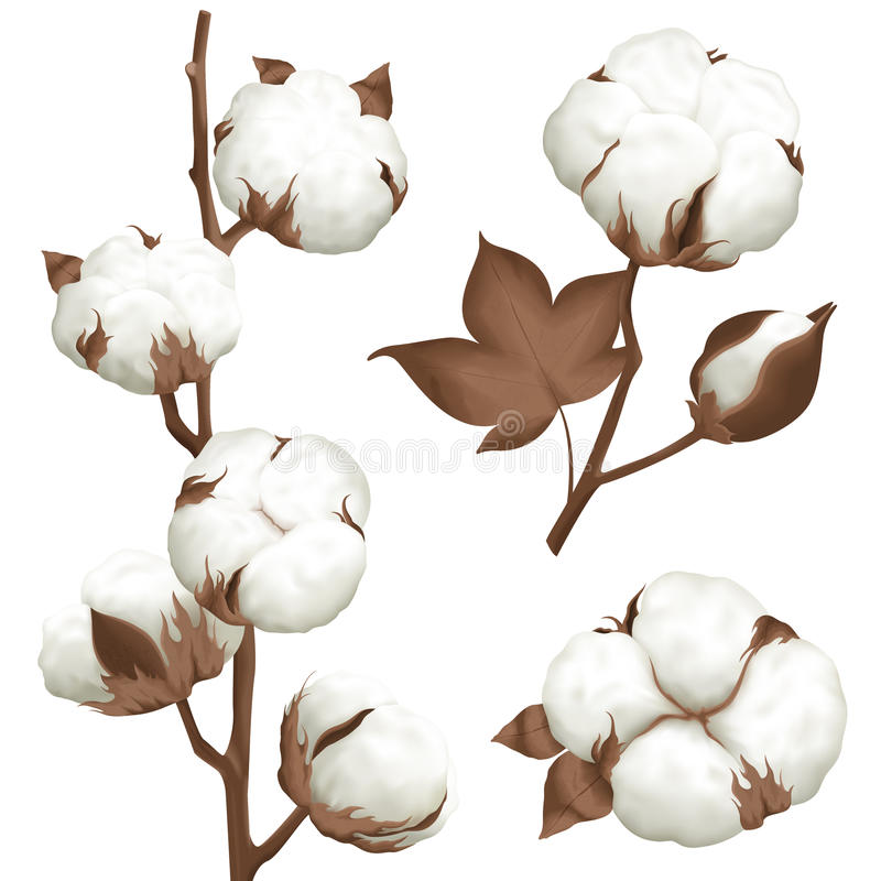 Cotton Plant Boll Realistic Set vector illustration