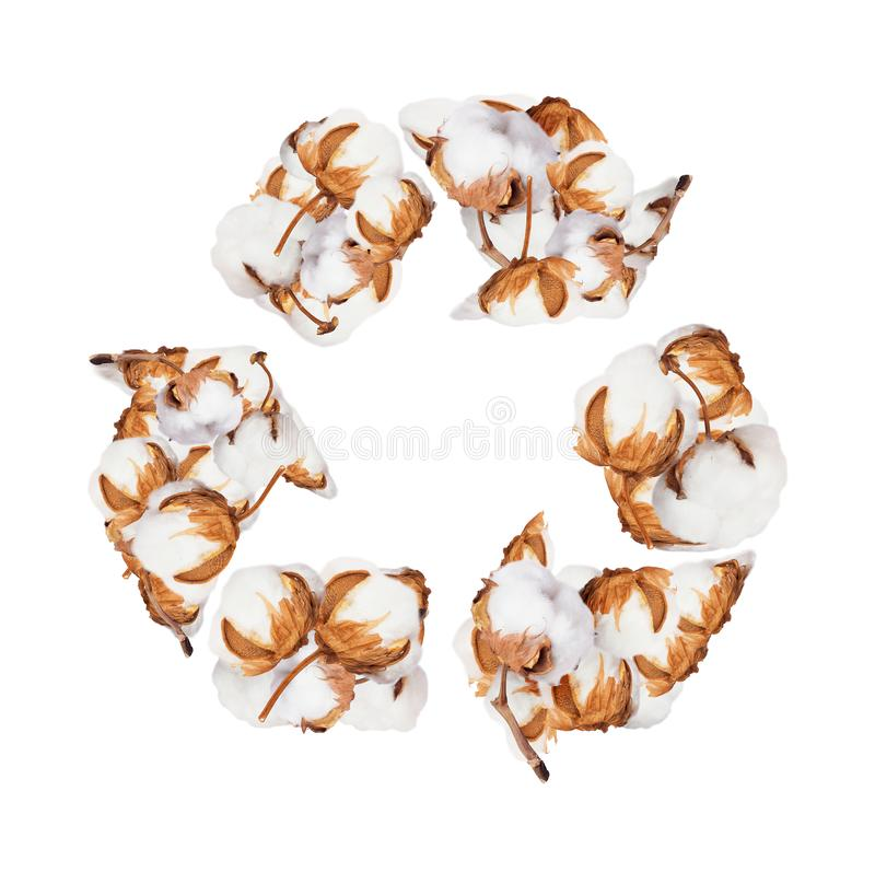 Cotton plant flowers in the form of recycling sign, isolated on white background.  stock images