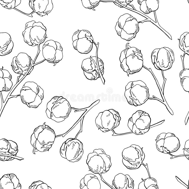 Cotton plant graphic black white seamless pattern sketch illustration royalty free illustration