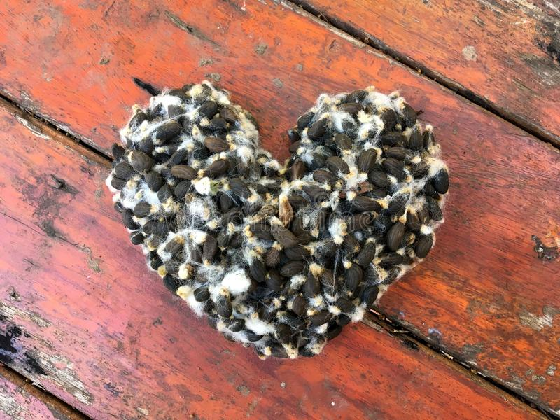 Cotton seeds heart shape on old wood background stock photos