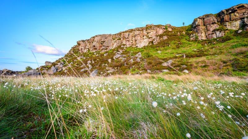 Cottongrass au-dessous de grand rocher de Wanney photographie stock