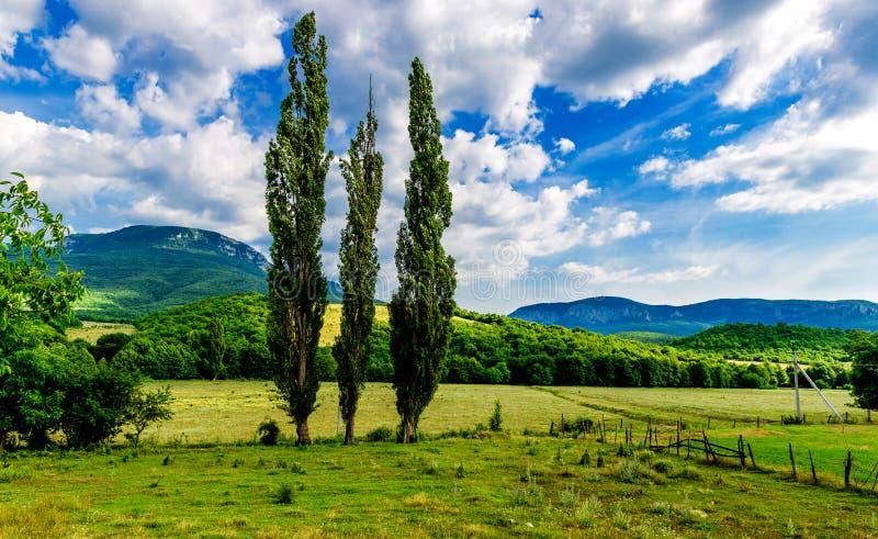 Cottonwood w halnej dolinie zdjęcia royalty free