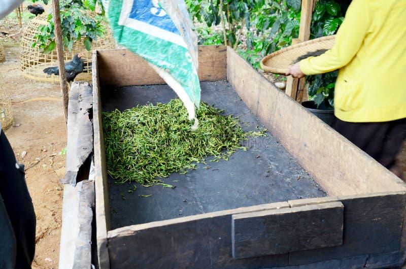 Cottura a vapore di lavoro di processo della gente della donna del Laos secca o pentola che inforna t fotografia stock libera da diritti