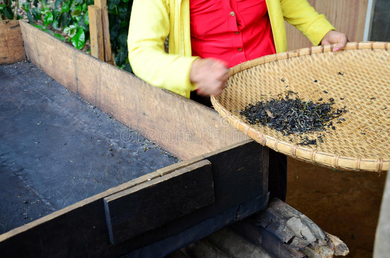 Cottura a vapore di lavoro di processo della gente della donna del Laos secca o tè di infornamento della pentola fotografia stock
