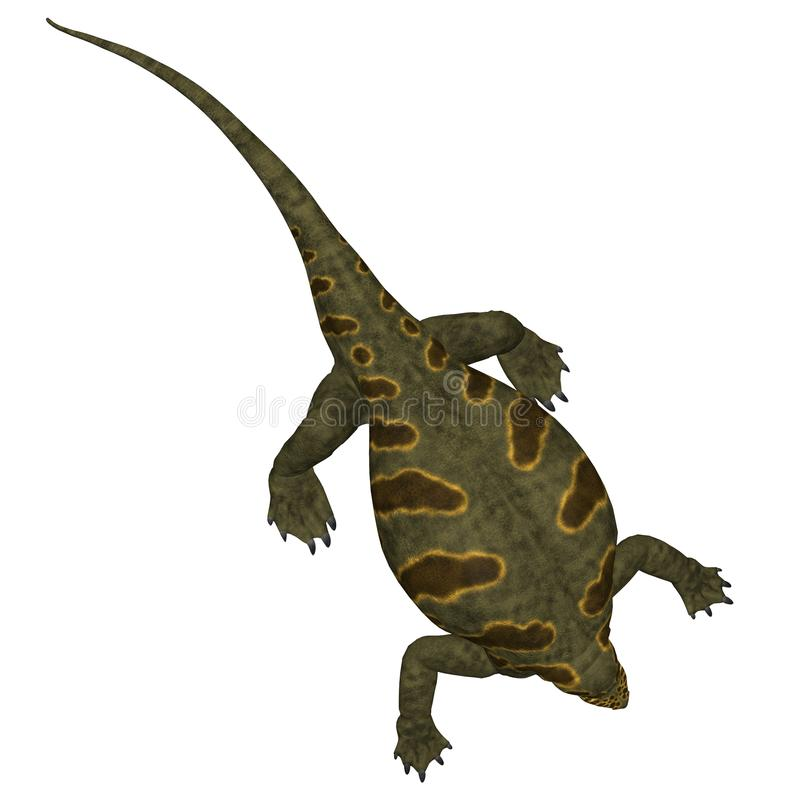 Cotylorhynchus Dinosaur on White. Cotylorhynchus was a synapsid herbivorous reptile that lived in North America during the Permian Period royalty free illustration