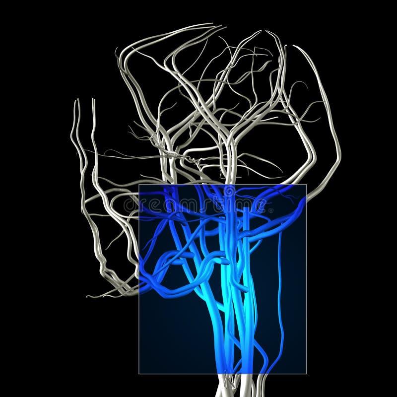 Cou et mâchoire MRI illustration de vecteur