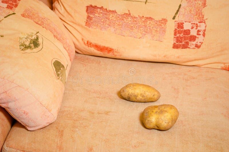 Couch potato stock image