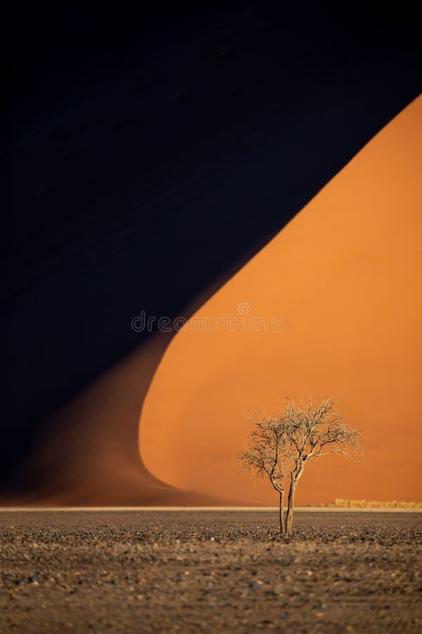 Coucher de soleil éclairant les immenses dunes de Sossusvlei image libre de droits