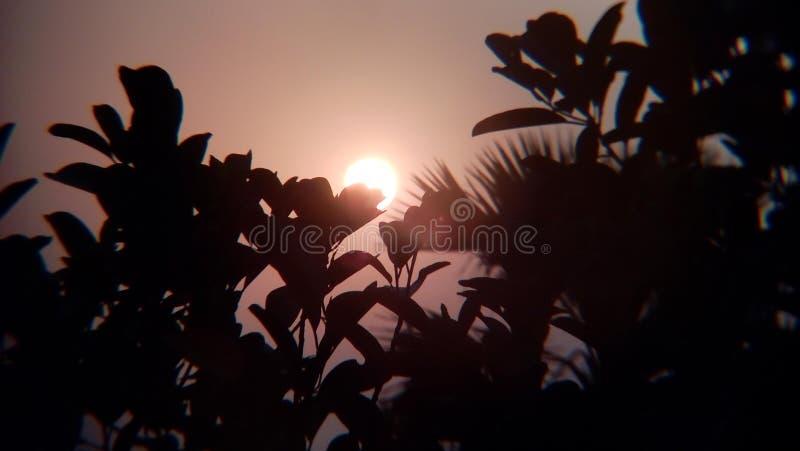 Coucher de soleil derrière les feuilles images stock