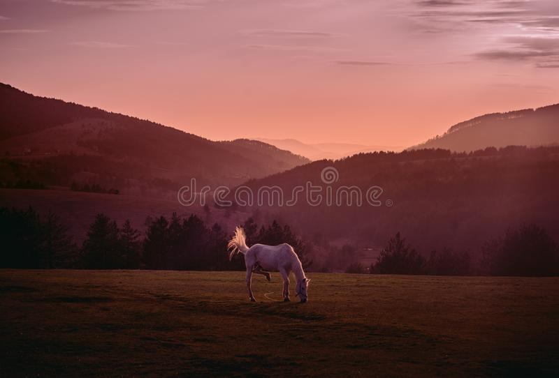 Coucher du soleil à la montagne de Zlatibor en Serbie images libres de droits