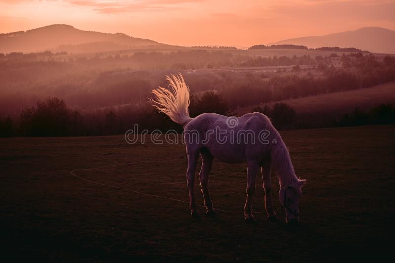 Coucher du soleil à la montagne de Zlatibor en Serbie photographie stock