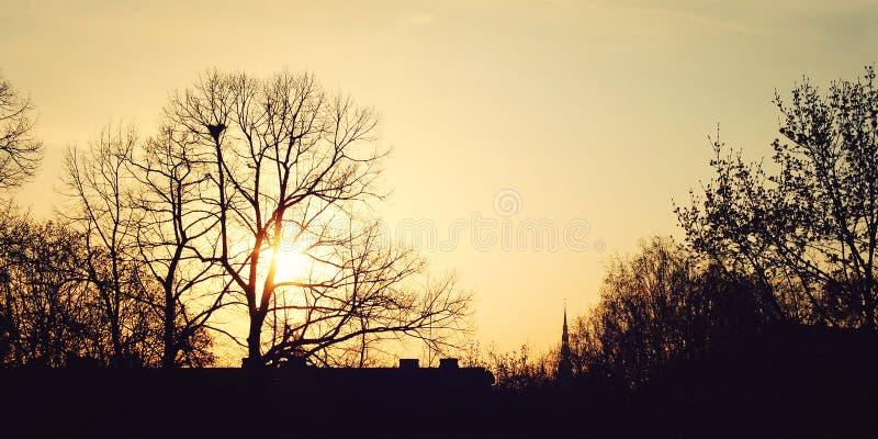 Coucher du soleil à Riga - filtre de vintage Le soleil jaune par les branches d'arbre photographie stock libre de droits