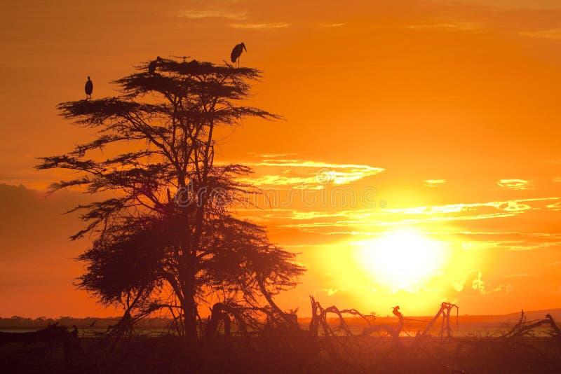 Coucher du soleil africain image stock