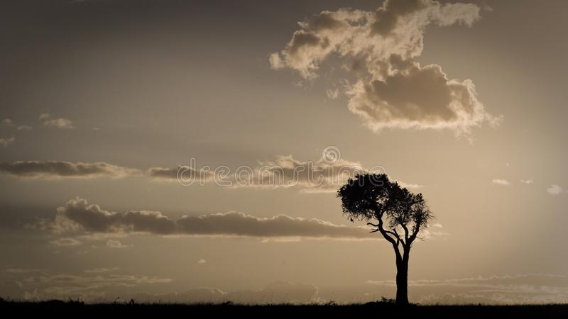 Coucher du soleil africain avec un arbre simple Maasai Mara, Kenya photo libre de droits