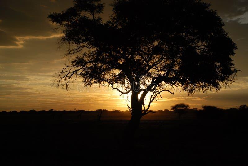 Coucher du soleil africain. Parc national d'Etosha photographie stock libre de droits