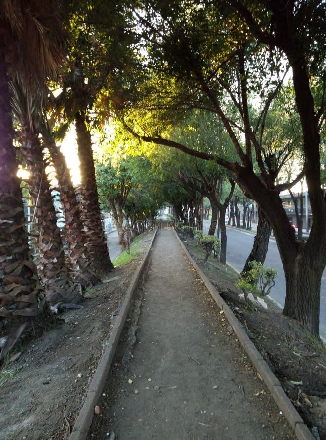 Coucher du soleil, arbres et paisible image stock