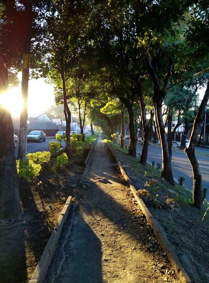 Coucher du soleil, arbres et paisible photographie stock