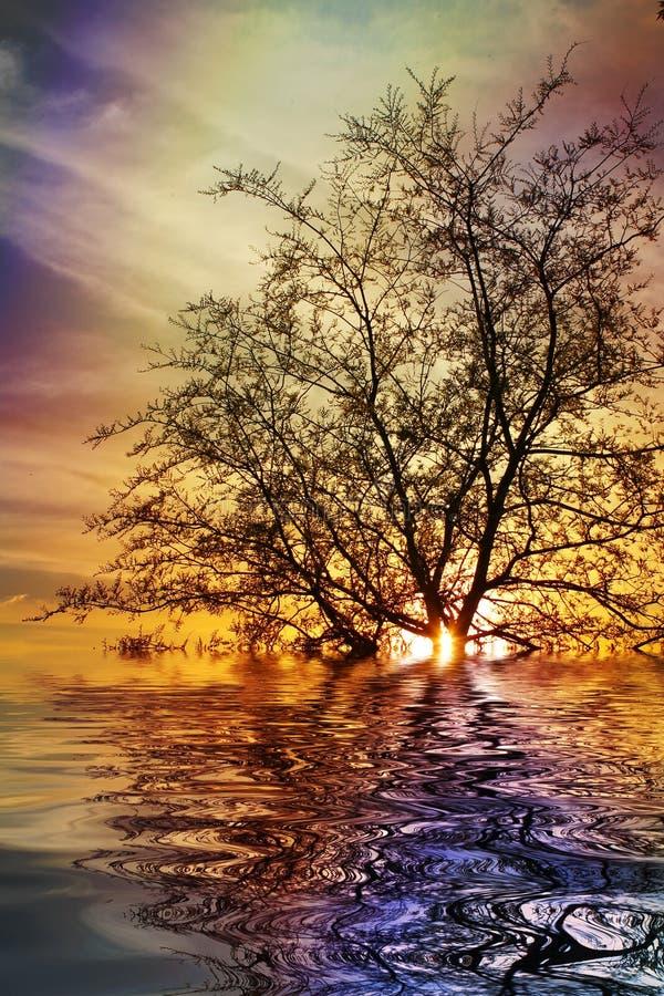 Coucher du soleil ardent sur le lac photographie stock libre de droits